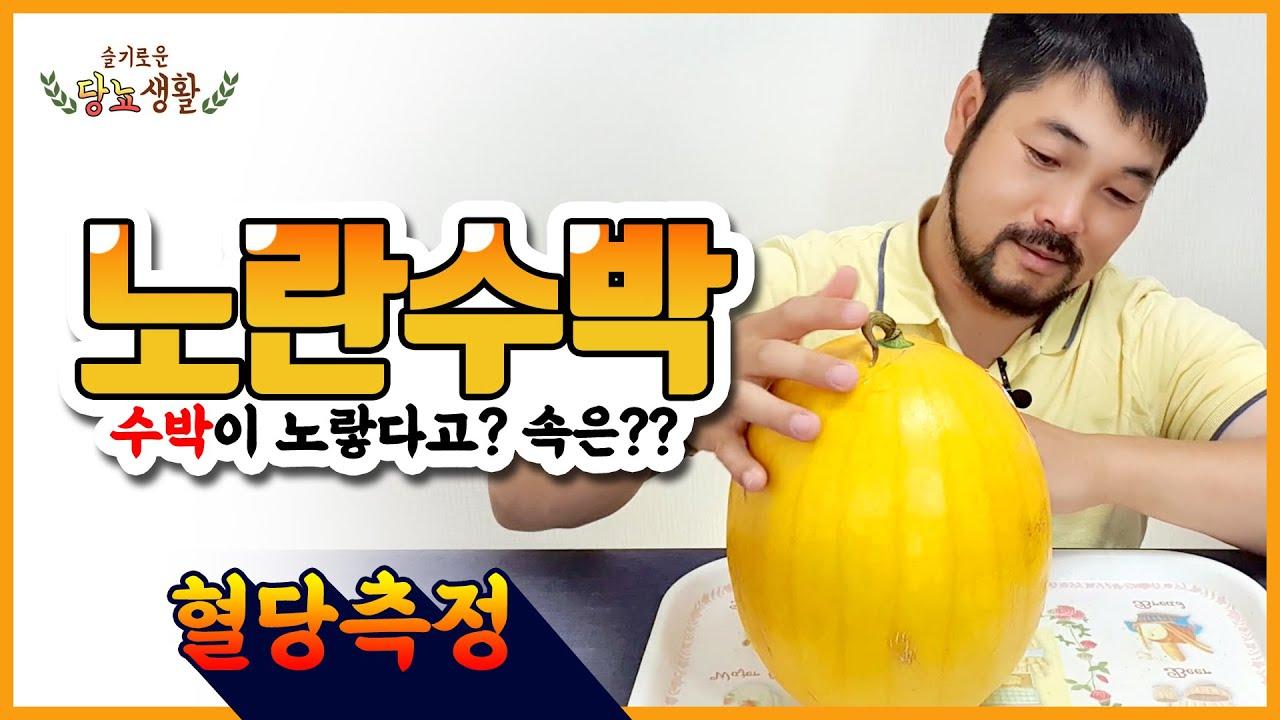 여름 대표 과일 [수박] 혈당이 괜찮을까?   노란수박 15분마다 혈당측정 #당뇨