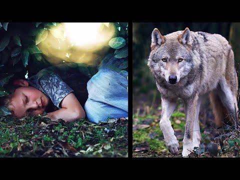 Волк спас мальчика,