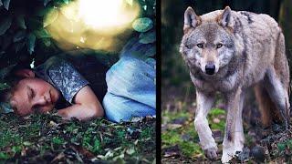 Волк спас мальчика, который заблудился в лесу
