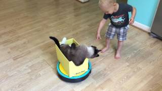 CAT ON THE #ROOMBA Rides INSIDE A #BoxyBED (7 MINUTE VIDEO) | TexasGirly1979