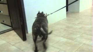 Опухоли костей у собак