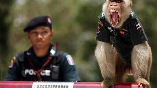 Угарные видео приколы. Маленькая обезьяна дает жару!!!
