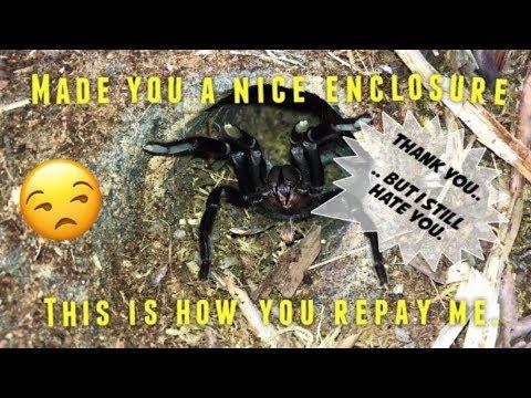 DIY tarantula habitat ~ NO MORE COLLAPSING BURROWS !!! [Experiment]