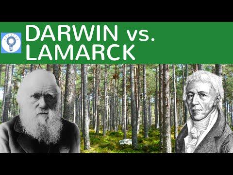 Evolutionstheorie Darwin