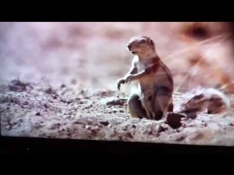 Funny Squirrel drops nut - YouTube