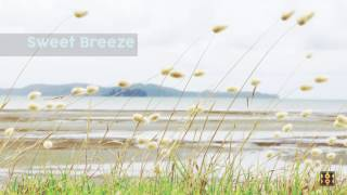 Background Music For Videos - Sweet Breeze