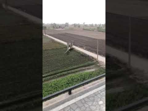 Dianasor in rajasthan Jodhpur