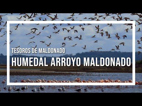Tesoros de Maldonado El Humedal programa Contacto