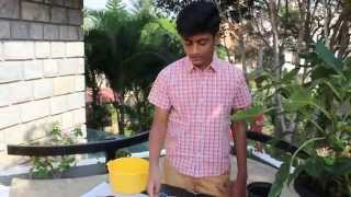 How To Grow Bell Pepper/ Capsicum