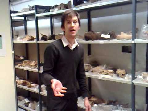 Tour of the Vertebrate fossil store