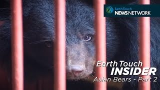 The Plight of Asian Bears Part 2: The Horrors of Bile Farming