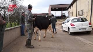 Sélection Prim'Holstein pour Eurogénétique