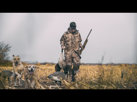 Waterfowl Hunting For Giant Canada Geese