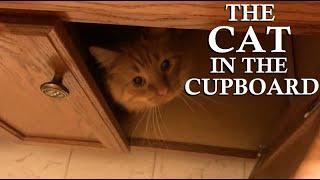 The Cat In The Cupboard!
