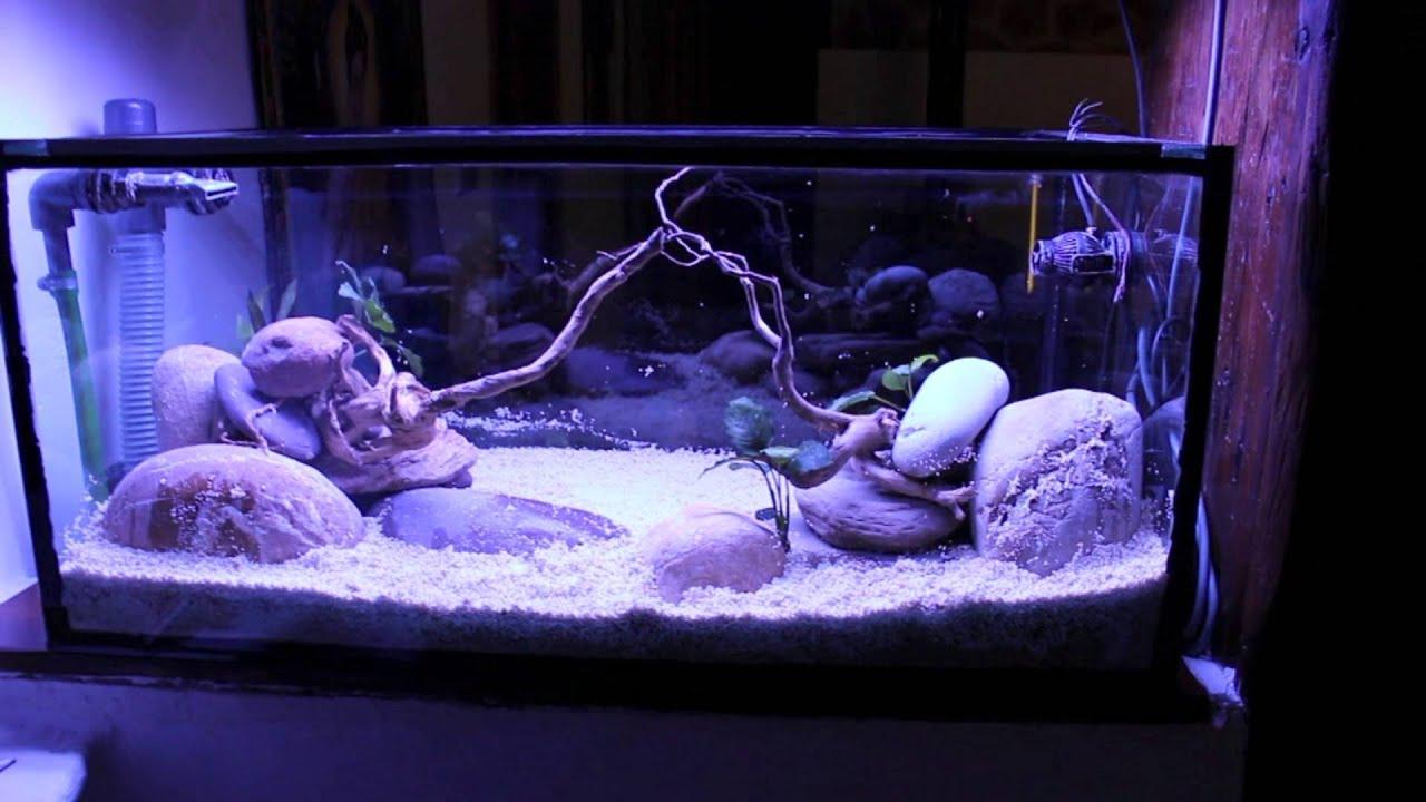 Montaje acuario c clidos malawi hd aquarium centrofama - Montaje de acuarios ...
