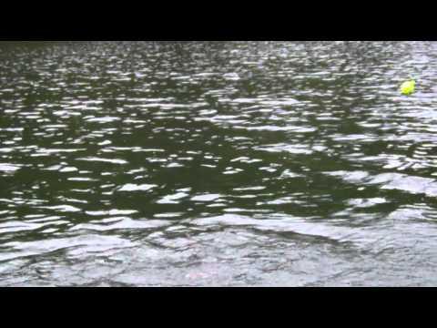 Trout fishing at white pines lake ca
