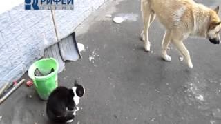 Сюжет  Бешенство животных