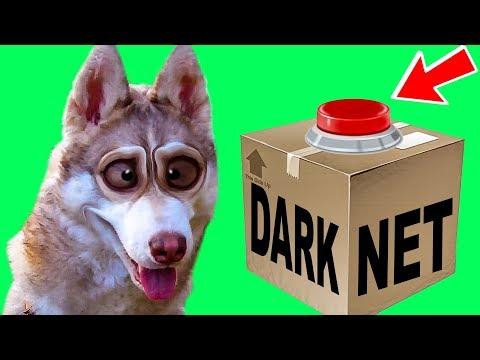 ПОСЫЛКА ИЗ ДАРКНЕТА?! (Хаски Бублик) Говорящая собака мистер Бубл