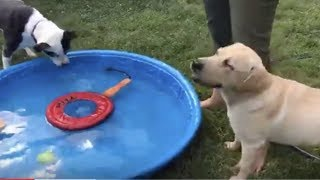 LIVE: Dog Pool Party - Guide Dog Takes a Break From Training | The Dodo LIVE