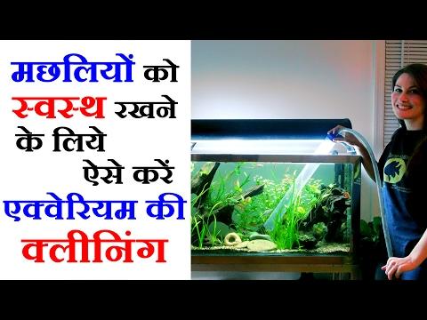 Pet Videos In Hindi - How To Clean Fish Aquarium - Pet Care Tips फिश एक्वेरियम को साफ करने के टिप्स