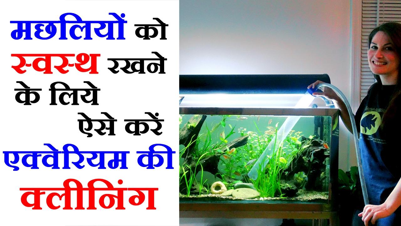 Pet Videos In Hindi How To Clean Fish Aquarium Pet Care Tips