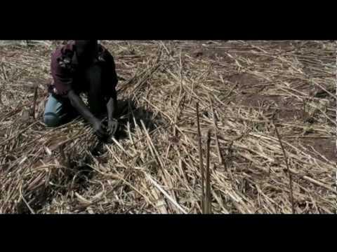 atmosfair Klimaschutzprojekt Burkina Faso