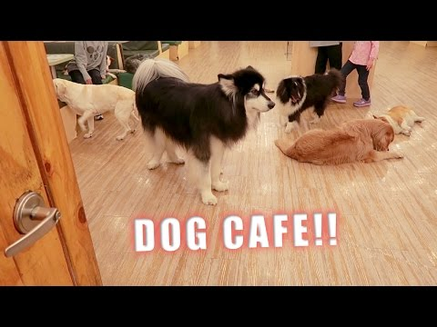 TAKING MY AWKWARD DOG TO A DOG CAFE!!