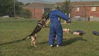 Isp Trooper Gets New K9 Dog