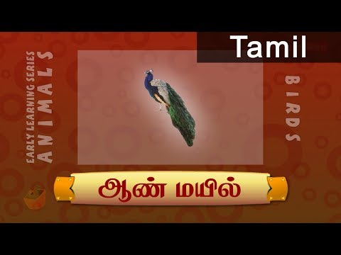 Peacock - Birds In Tamil - Pre School Animated /Cartoon Educational Videos For Kids