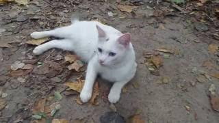 Красавица кошка гуляет по лесу \ Beautiful cat walks in the woods