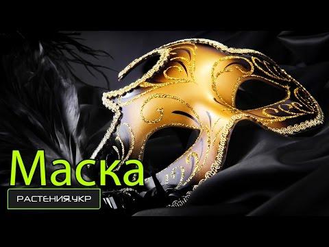 Как сделать маскарадную маску для карнавала ? / How to make a mask for the masquerade carnival?