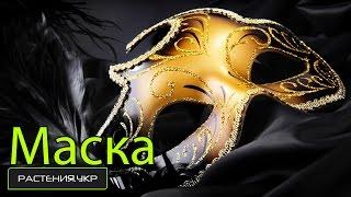 видео Как сделать маску из бумаги или картона: карнавальную, новогоднюю, венецианскую?