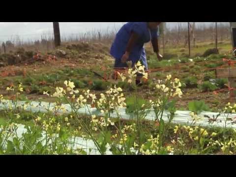 Women on Farms - Land is Life: Climate Impacts