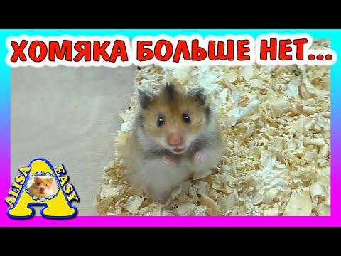КУДА ПРОПАЛ Хомячок Микки / Хомки с рынка / новое видео / Alisa Easy Pets