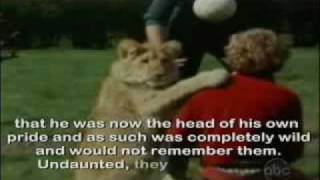 Christian the Lion- Reunites