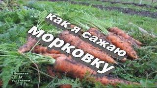 Как сажать  морковь(Здравствуйте, дорогие друзья! Морковь – очень вкусный и полезный корнеплод, выращиваемый многими садовода..., 2016-05-09T07:09:44.000Z)