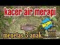 Kacer Air Meninting Air Menetas   Mp3 - Mp4 Download
