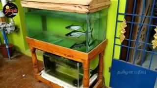 Shark 🦈 fish feeding tips in Tamil