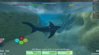 ROBLOX | The new mega shark gameplay!