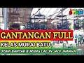 Full Gantangan Murai Batu Disini Banyak Burung Calon Jadi Jawara  Mp3 - Mp4 Download