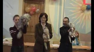 Представление породы флэппиг на выставке кошек PCA