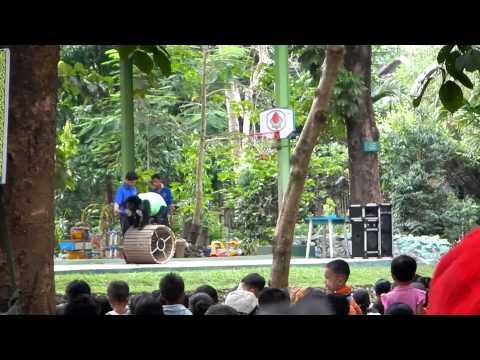 myanmar zoo bear