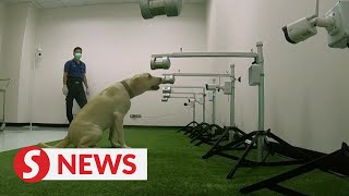 Thai Sniffer Dogs Make Covid-19 Detection Debut