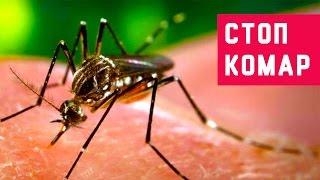 видео Избавляемся от «насекомых». Детектор жучков – гарант безопасности