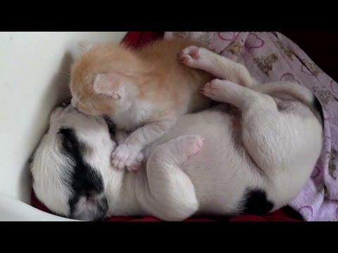 Cute Sleeping Kitten Wallpaper Cnn Distraction Watch Kitten And Puppy Cuddling Youtube
