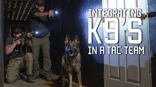 How to Train A Special Forces Military Dog | K9's in a Tactical Team & Home Defense