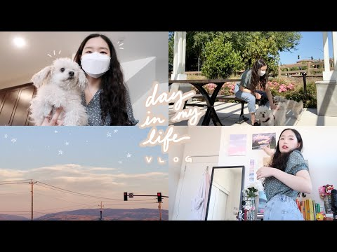 day in my life vlog: spending time with my dogs, some redecorating, summer vibes