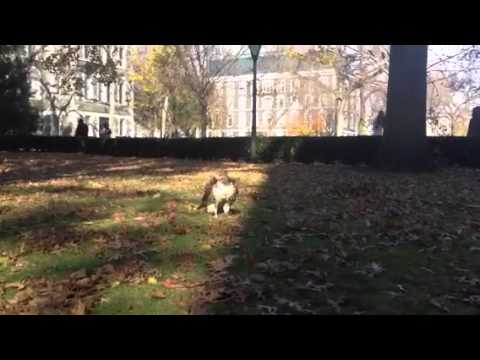New student on Fordham's campus