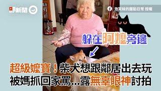 柴犬想跟鄰居出去玩 被媽抓回家罵 露無辜眼神向阿嬤討拍|寵物|動物|狗狗