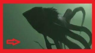 Top 5 Monstruos Gigantes del Océano !!!